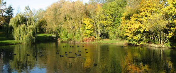 Autumnal-pond-view