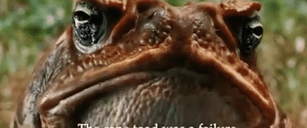 The cane toad was a failure