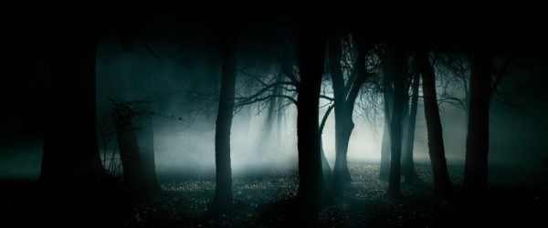 forest-dark-fog-dark-forest-wallpaper
